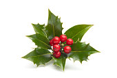 Close-up of vividly colored holly isolated in white