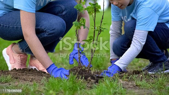 Close-up of volunteers child and woman planting tree in city park together