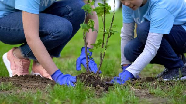 plan rapproché des volontaires enfant et femme plantant l'arbre dans le stationnement de ville ensemble - plante photos et images de collection