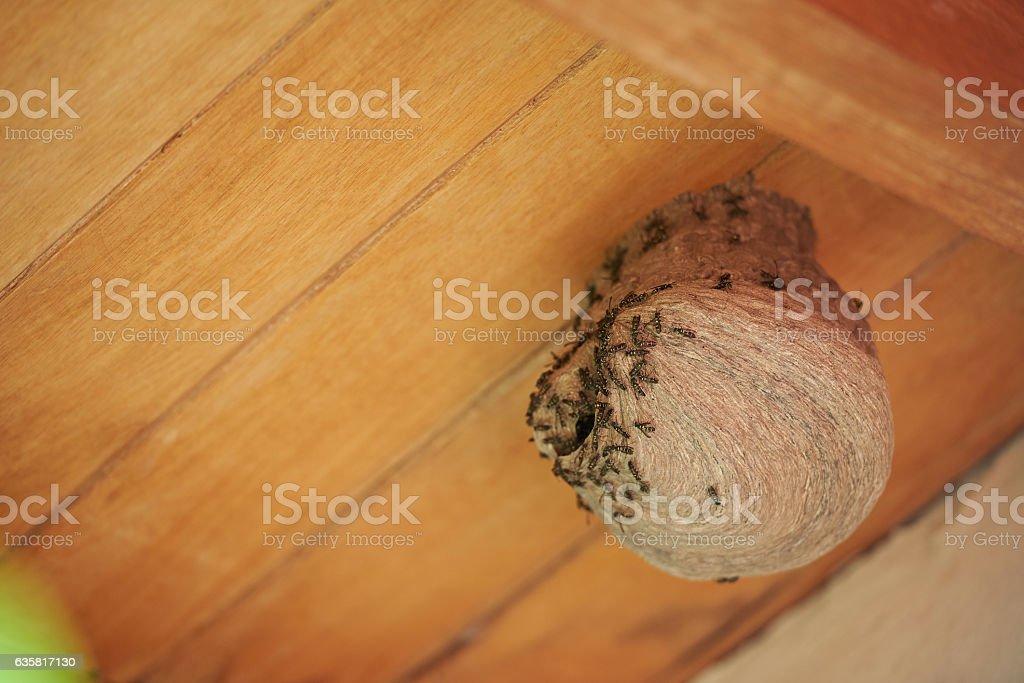 Closeup of wasp nest stock photo