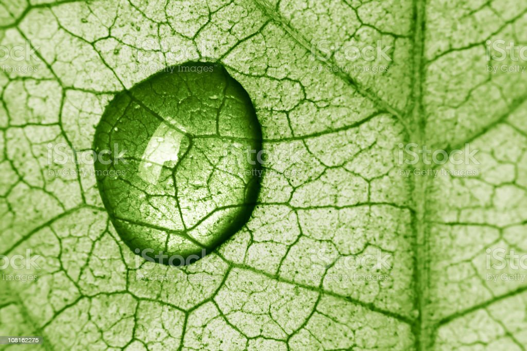 Close-up of water drop on a leaf lit from behind stock photo