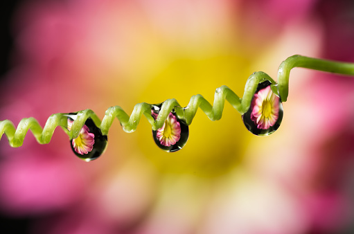 close-up of water drop with flower reflection