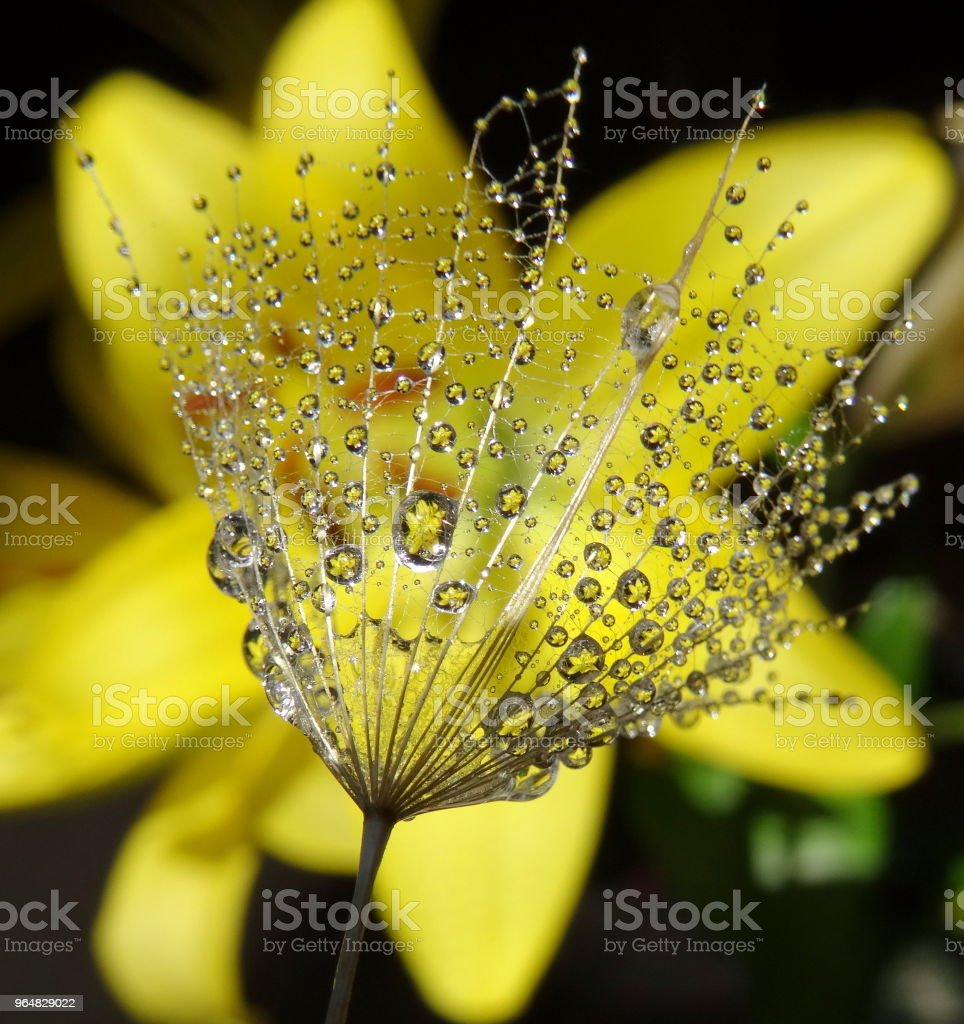Close-Up of water drops on plant royalty-free stock photo