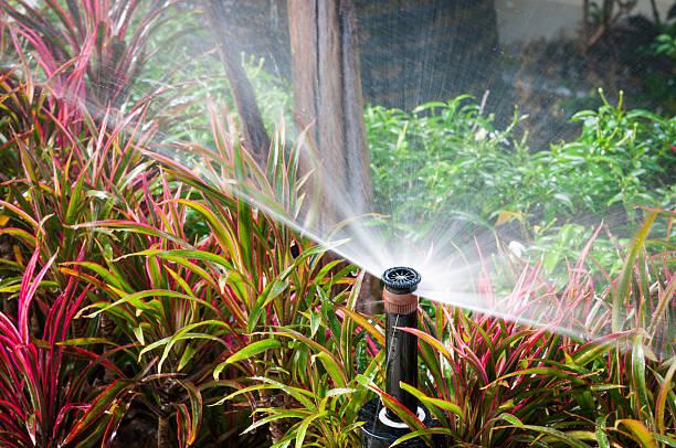 closeup of water springer stock photo