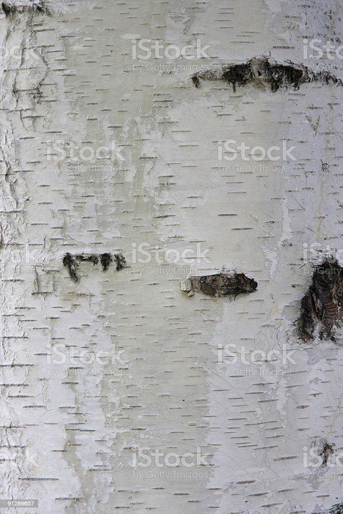 Closeup of White Birch Texture Background royalty-free stock photo