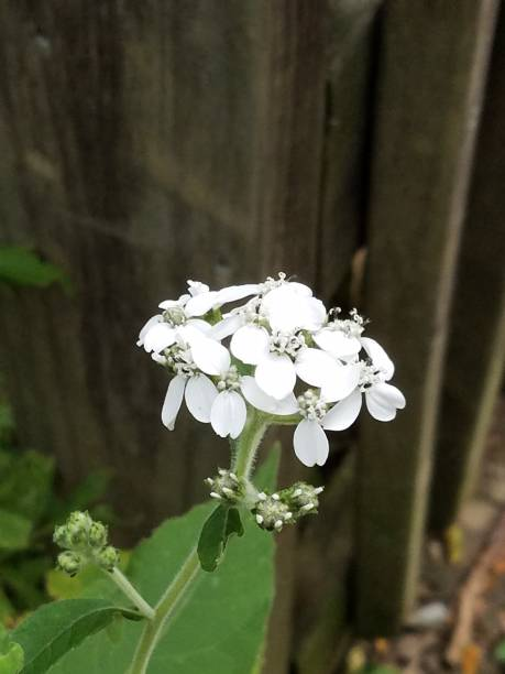 Closeup of white flower against rustic wood post stock photo