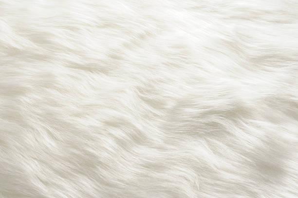 Closeup of white fur texture background picture id487484599?b=1&k=6&m=487484599&s=612x612&w=0&h=nd84fdoksh7wt yrwrmrlo9ned2crkv9xcfi2dlgw5g=