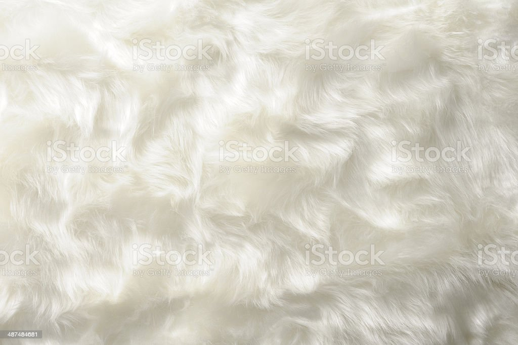 royalty free white fur pictures images and stock photos