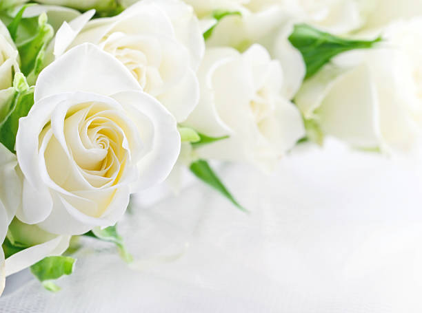 Closeup of white roses stock photo