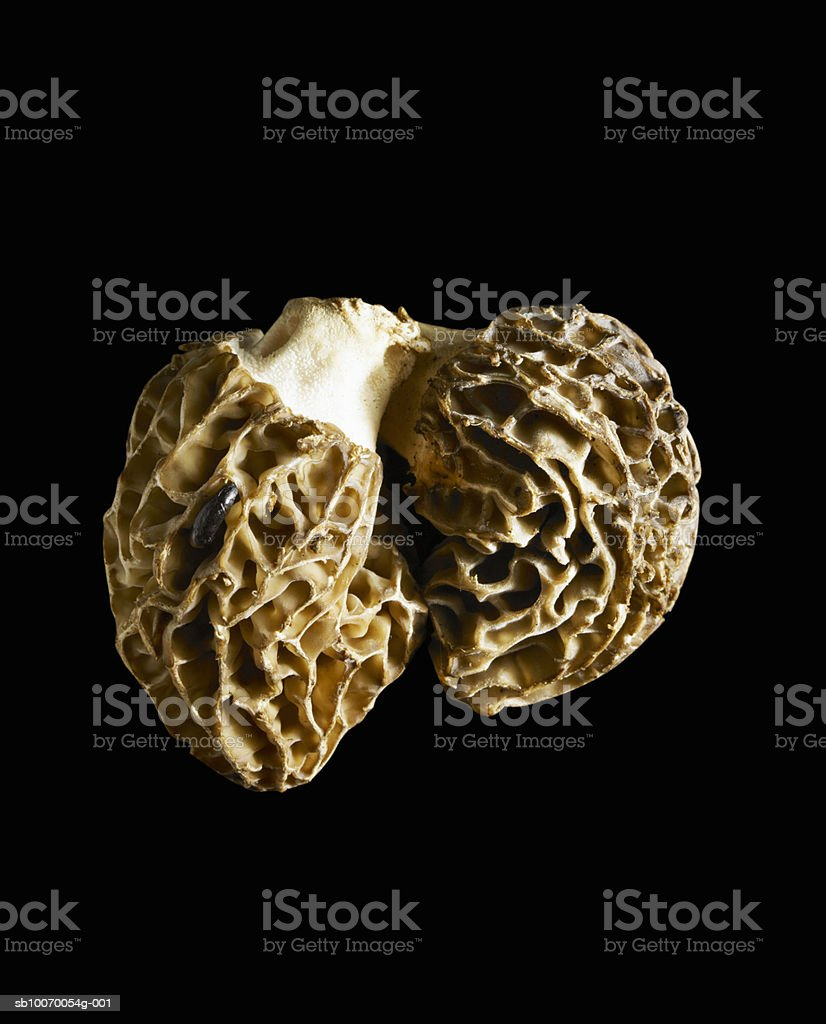 Close-up of white truffle on black background royalty-free 스톡 사진