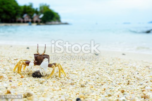 Beautiful nature of wildlife, Close-up of Wind Crab, Ghost Crab or Ocypode on the sand in summer at the beach near the sea in Koh Lipe island, of Tarutao National Park, Satun, Thailand