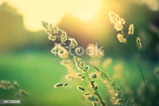 Beautiful wildflower in the field.