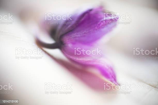 Closeup of woman hand holding delicate dry purple orchid flower picture id1014213100?b=1&k=6&m=1014213100&s=612x612&h=6nx5mixtatprtl71gwect1jdn8m92yor7i3n6qavtc0=