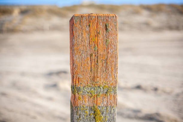 Close-up of wooden post on the beach of Noordwijk, the Netherlands Close-up van strandpaal hout stock pictures, royalty-free photos & images