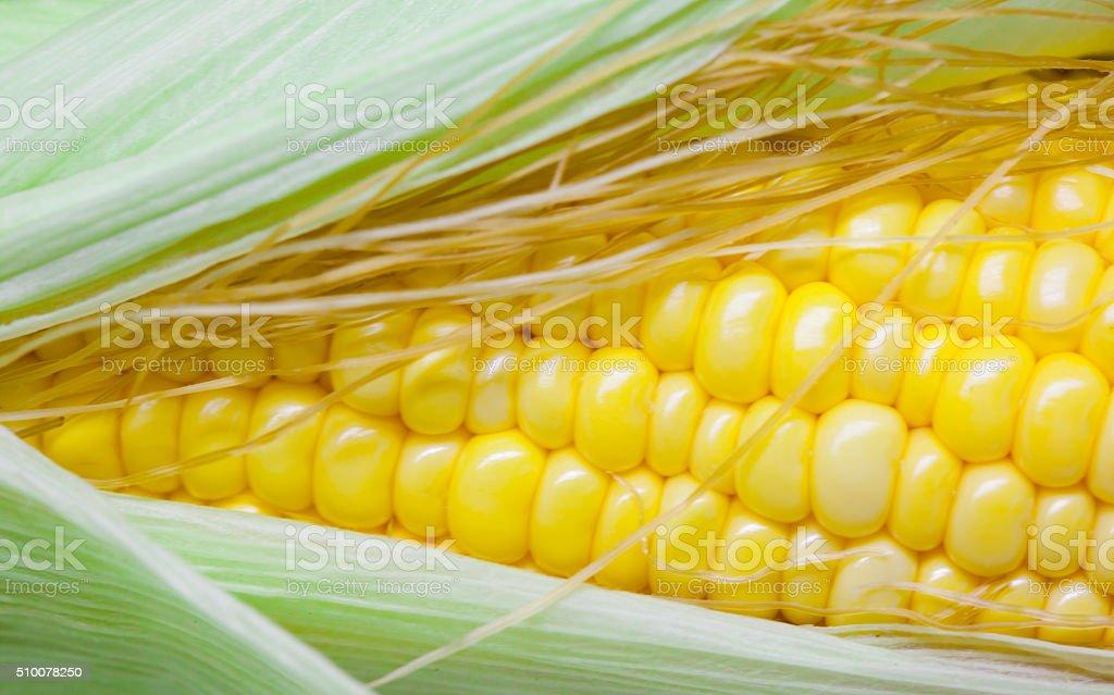 Nahaufnahme einer gelben Mais – Foto