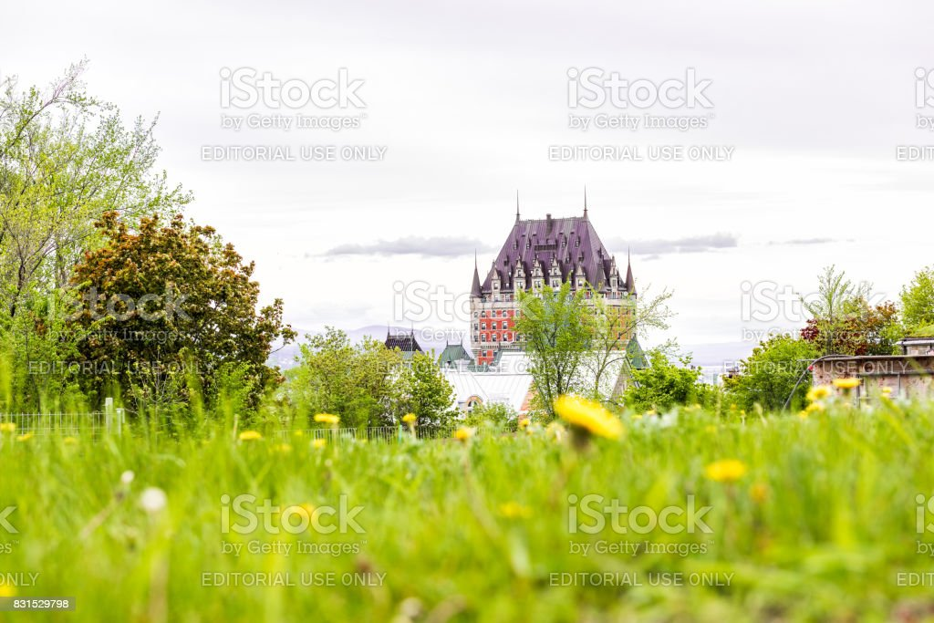 Closeup of yellow dandelion flowers in park garden with view of Chateau Frontenac stock photo