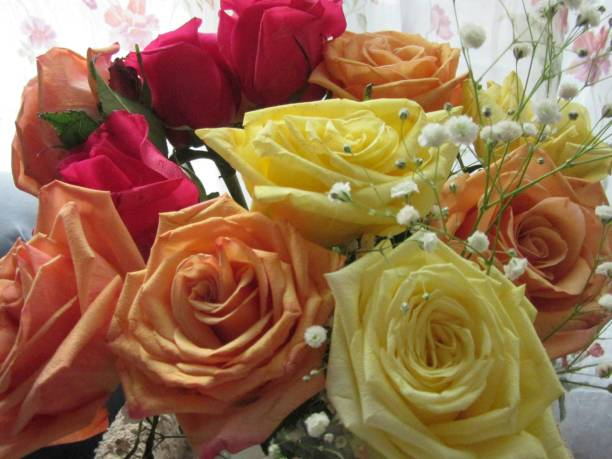 Close-up of yellow, orange, and red roses stock photo