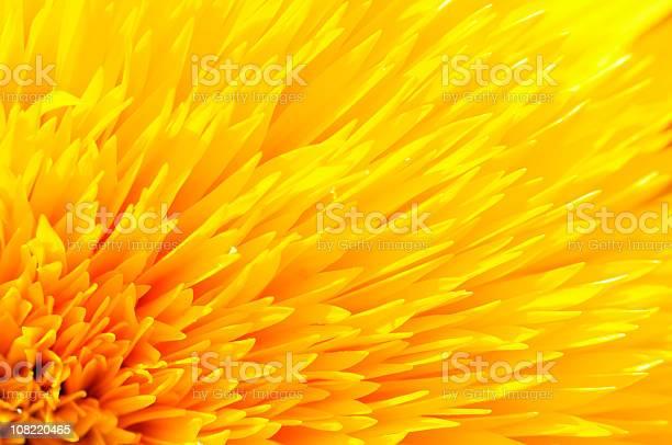 Closeup of yellow sunflower petals picture id108220465?b=1&k=6&m=108220465&s=612x612&h=ilawdbtq3zbn3agj hjvirnxoxwls3mgdnwngyrle4u=