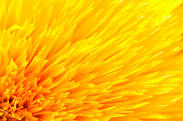 close-up of yellow sunflower petals - sarı stok fotoğraflar ve resimler