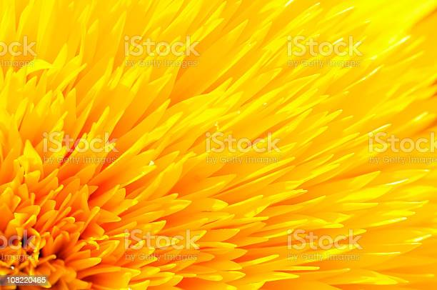 Photo of Close-up of Yellow Sunflower Petals