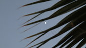 istock Close-up old palm tree after the sunset. 1321360946