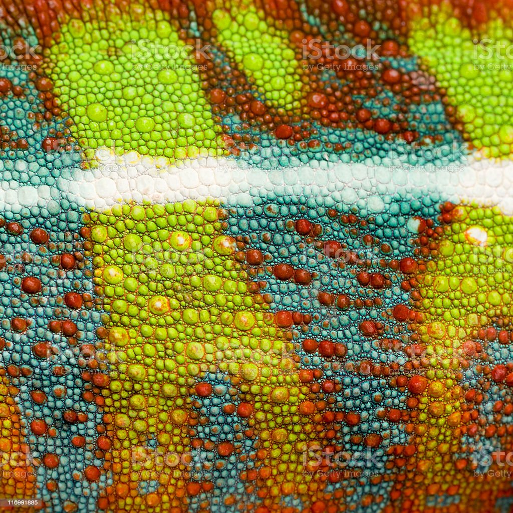 close-up on a colorful reptile skin stock photo