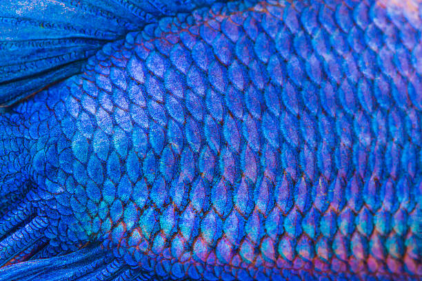 Close-up on a fish skin stock photo