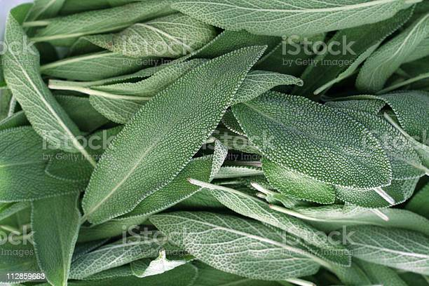 Fresh bright green sage leaves on display at a farmers market.