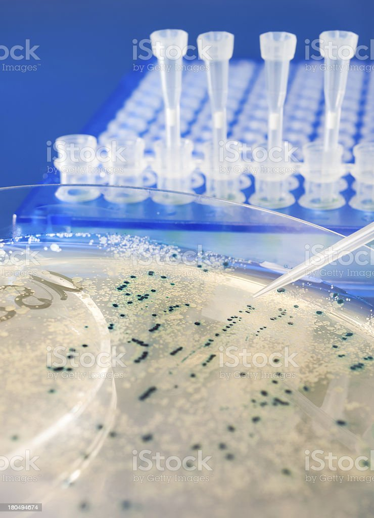 Closeup on bacterial colonies stock photo