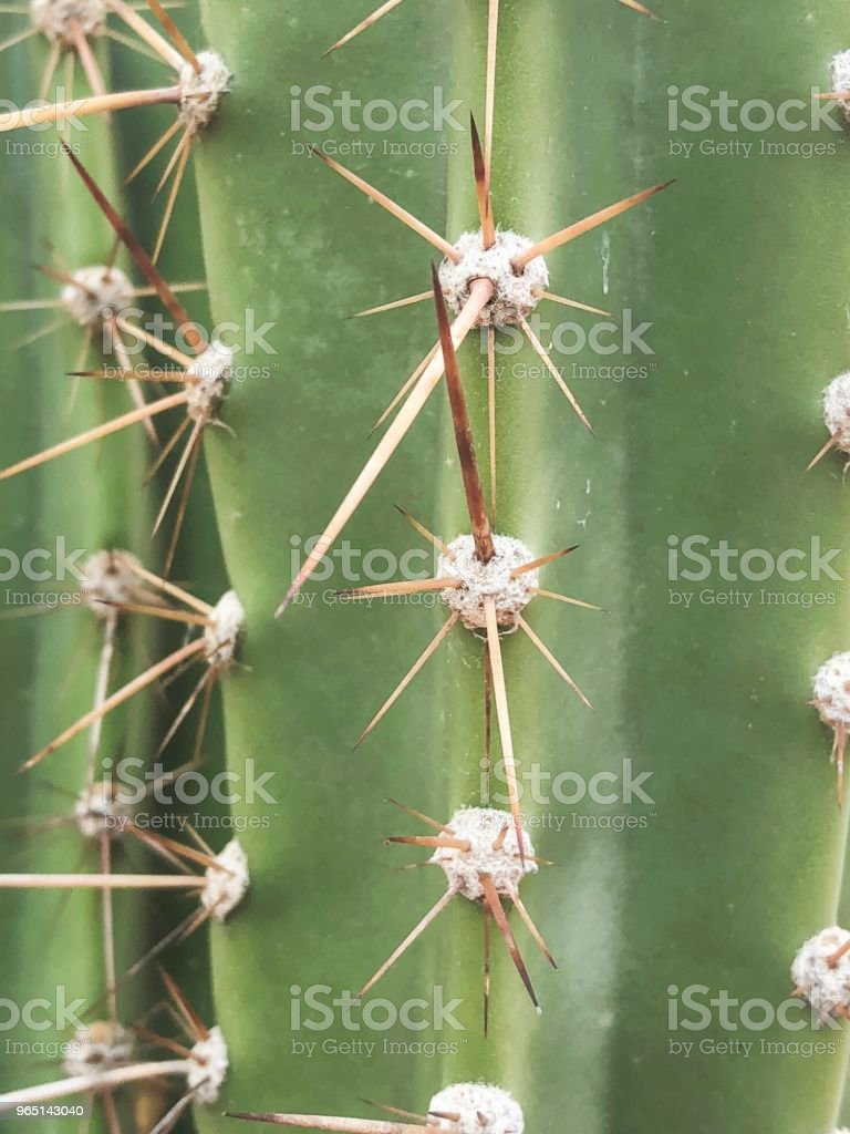 Closeup on cactus succulent plant with thorns royalty-free stock photo