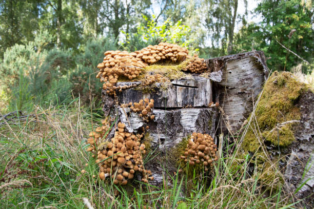 Closeup on Fungi stock photo