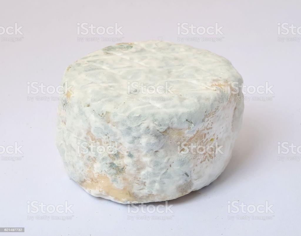 Gros plan du fromage de chèvre  photo libre de droits