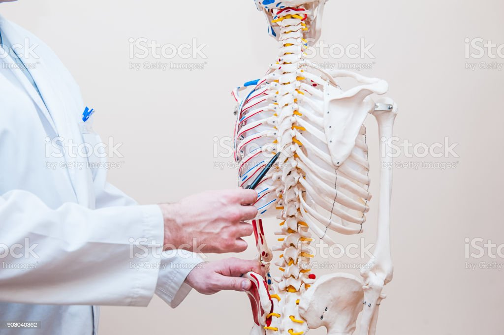Closeup On Medical Doctor Man Pointing On Thorax Of Human Skeleton