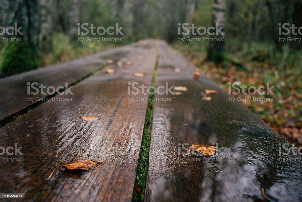 Closeup on plank hiking trail wet after rain – Foto