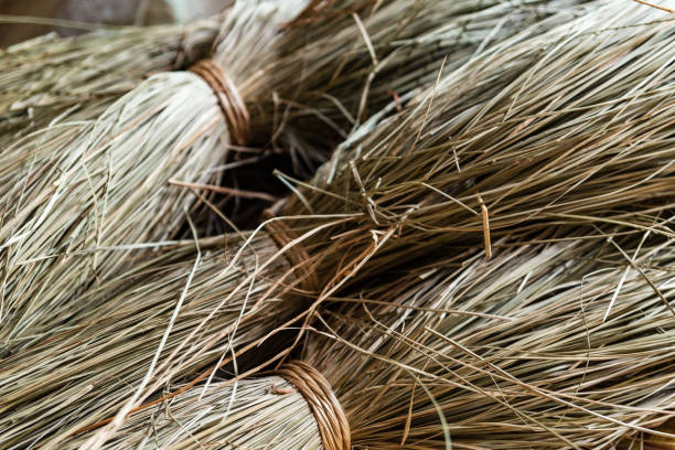 Close-up on sacks of straws for sedge mat weaving in Ben Tre, Mekong delta region, Vietnam. Horizontal view stock photo