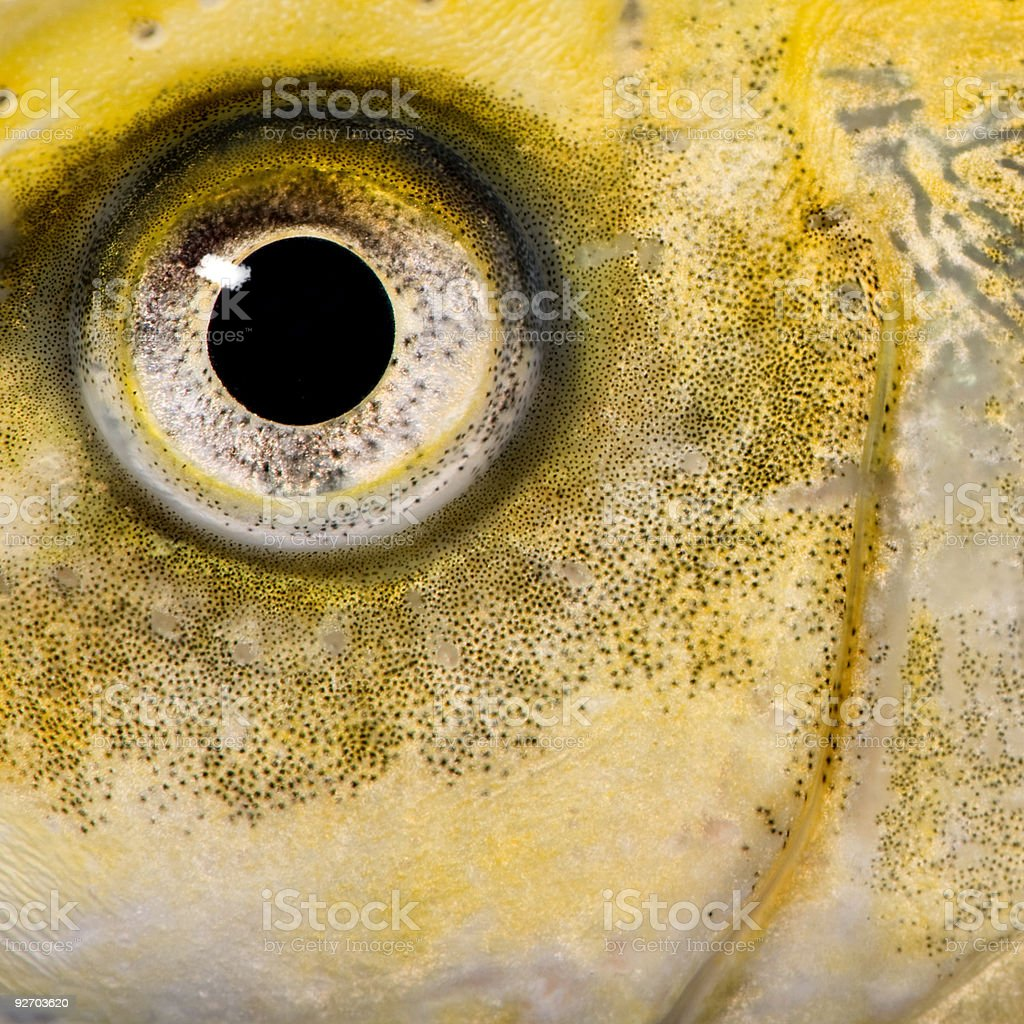 Close-up on the eye of a yellow fish stock photo