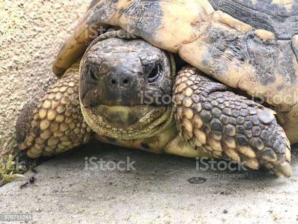 Closeup on turtle face picture id976711244?b=1&k=6&m=976711244&s=612x612&h=usbiwrcotfv9xq 92bx2tayjozomu6gyvkyf msyg1g=