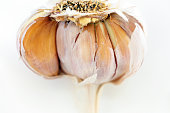 Closeup organic garlic, white background with copy space, full frame horizontal composition