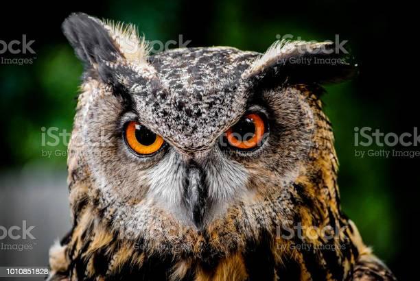 Closeup owl picture id1010851828?b=1&k=6&m=1010851828&s=612x612&h=2 jmkrxbuj26hivcez5nl1gsfj7qow5kgmdxjbbae g=