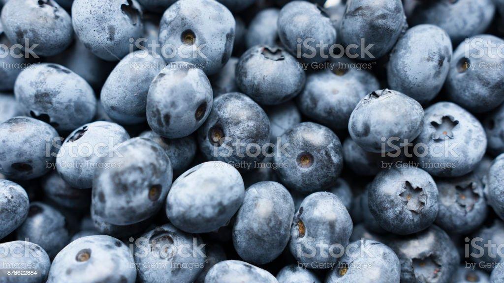 Closeup panning shot of fresh bilberry or blueberries, stock photo