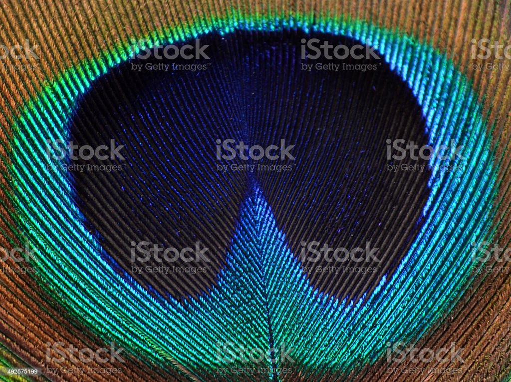 Close-up peacock feather heart stock photo