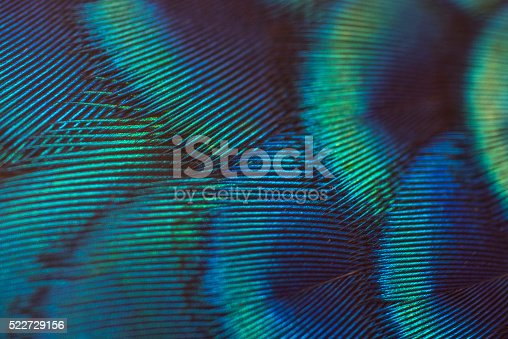 istock close-up peacock feathers 522729156