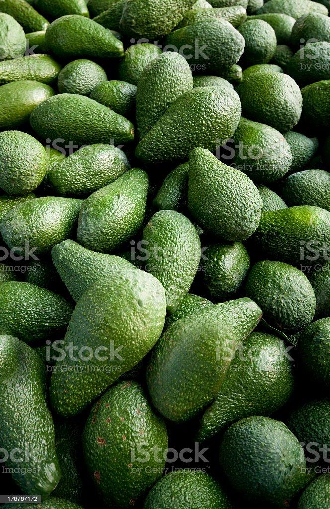 Close-up photo green avocado harvest stock photo