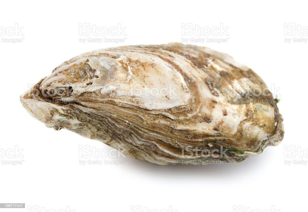 Austern – Foto