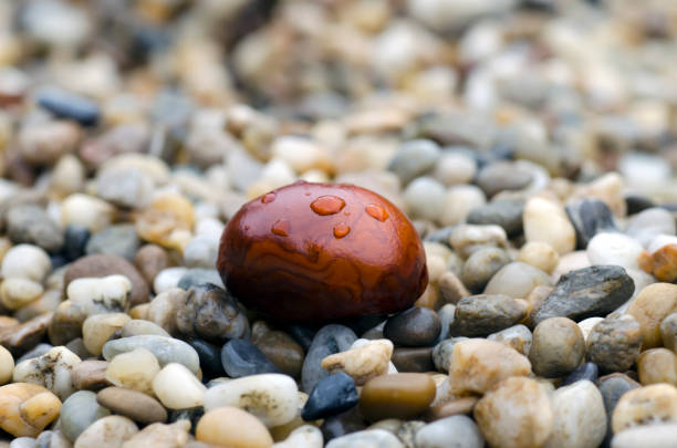 Close-up photo of brown chestnut with drops of rain lying on stones in autumn rainy day stock photo