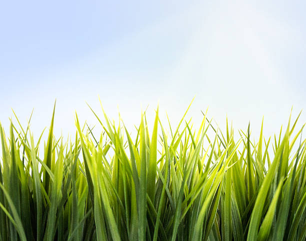 Close-up photo of fresh green growing grass in sunlight stock photo