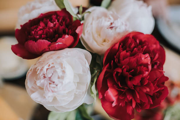 Closeup photo of red and white flowers blurry wooden background picture id1218011526?b=1&k=6&m=1218011526&s=612x612&w=0&h=j52nnweavfxdq8up8o3qyrnkmzlkuiihts9leiwc85q=