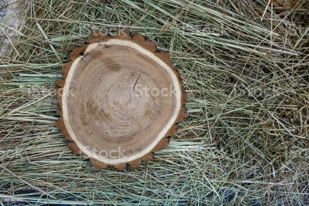 Closeup photo of tree trunks lying on hay Wooden saws Cross section of the tree stock photo