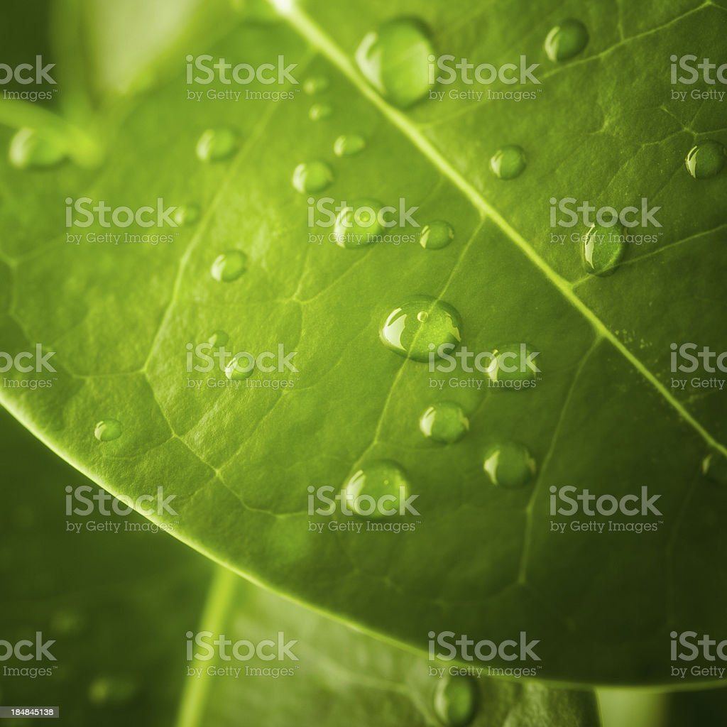 Close-up photo of water droplets on a leaf royalty-free stock photo
