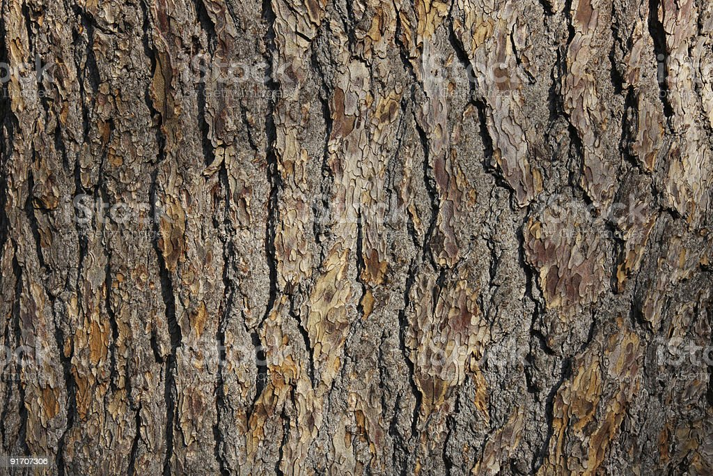 A close-up photograph of a section of Oak bark royalty-free stock photo